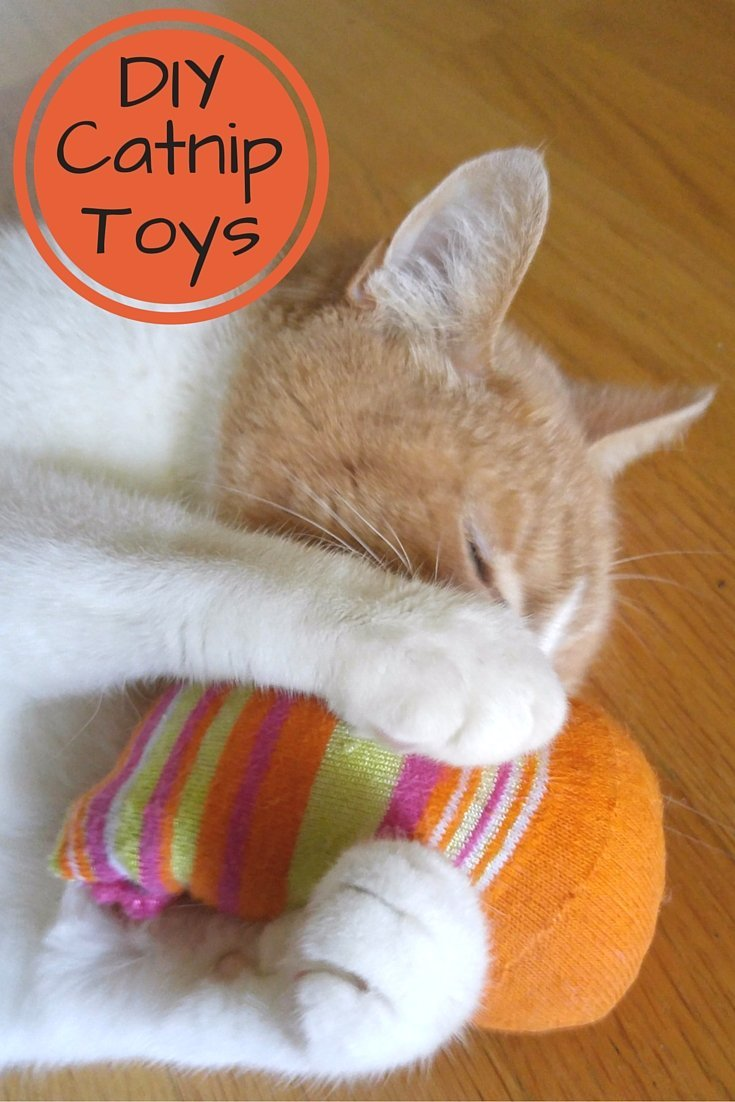 Homemade catnip toys or what to do with all those socks for Diy easy cat toys