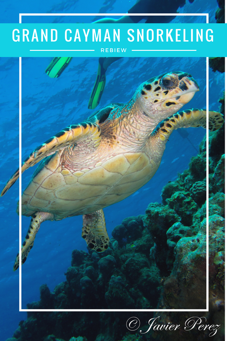 best snorkeling excursion in grand cayman honest and truly